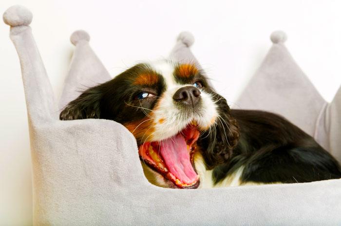 Cuccia per interni per cani