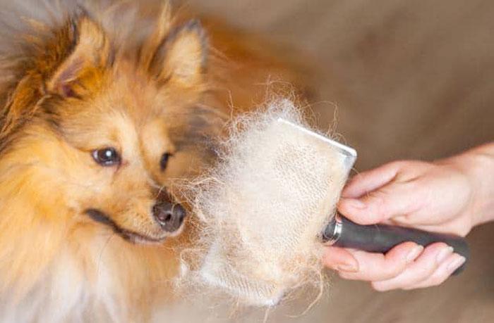 Miglior spazzola per cani