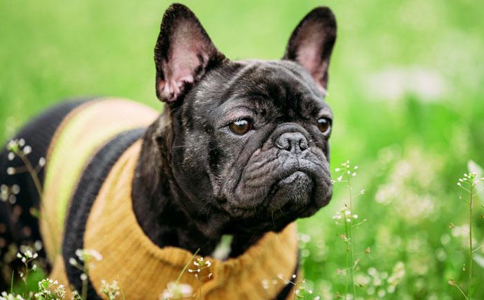 Pettorina per cani di taglia piccola