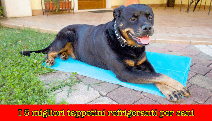 I 5 migliori tappetini refrigeranti per cani