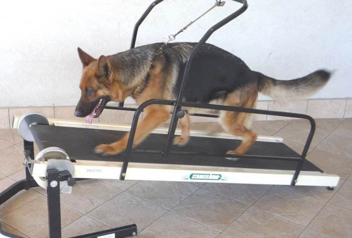 Miglior tapis roulant per cani