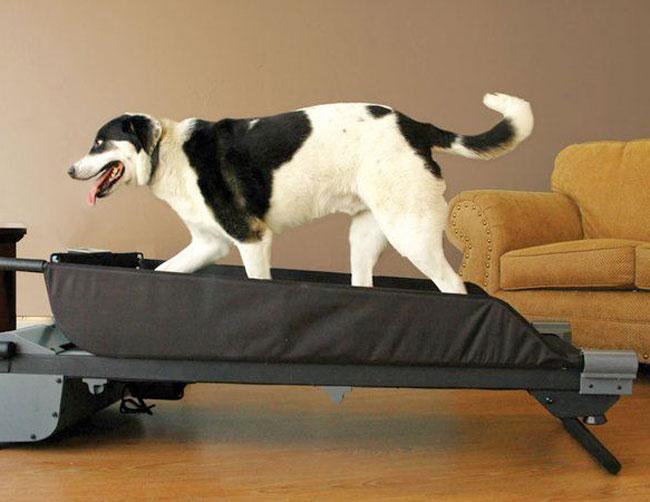 Tapis roulant da allenamento per cani