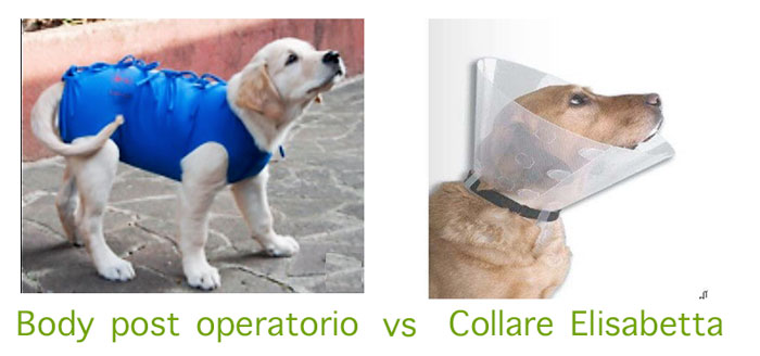 Collare Elisabetta Vs Body post operatorio