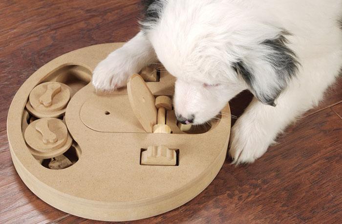 Gioco per l'attivazione mentale dei cani