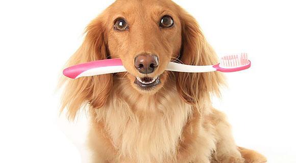 Saluzioni per lavare i denti al cane