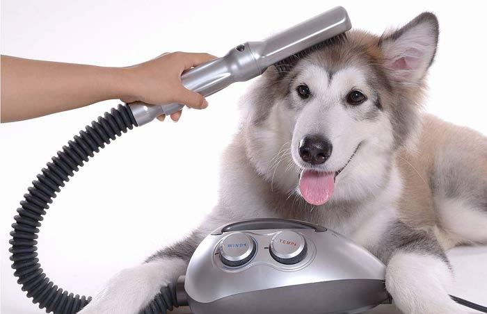 Miglior soffiatore per cani