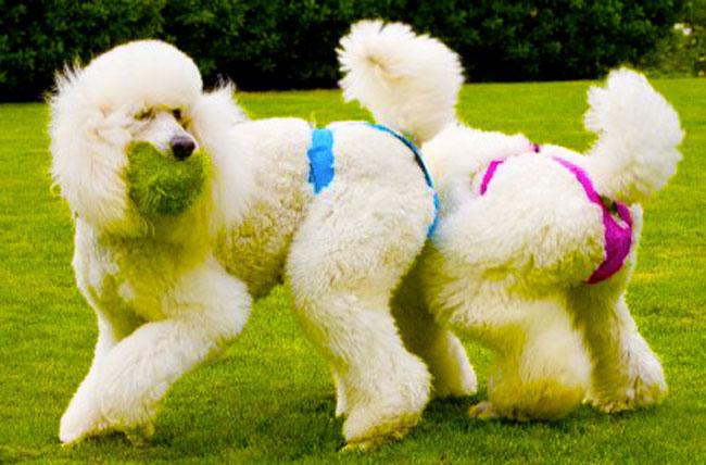Migliori mutande per cani