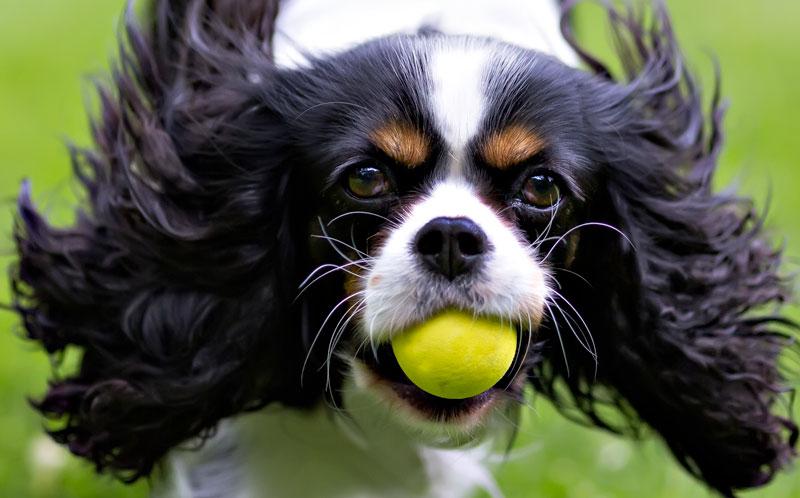 Palle per cani