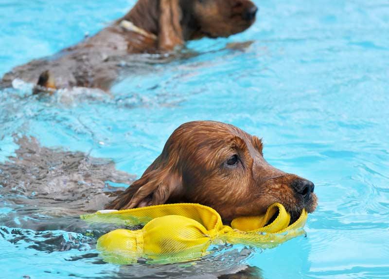 Miglior piscina per cani