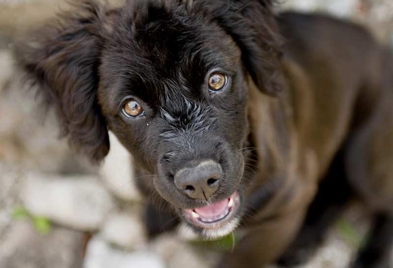 Collare antiparassitario per cani