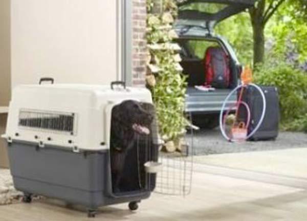 Miglior trasportino auto per cani