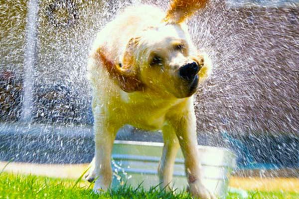 Quando usare il phon per cani