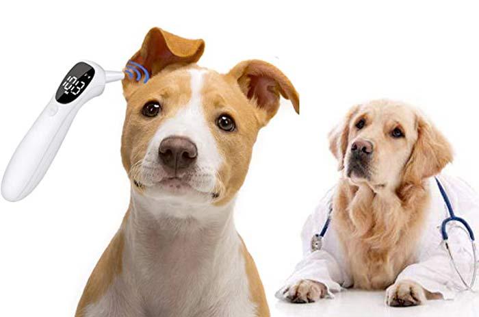 Termometro per cani